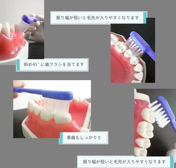 「斜め45°に歯ブラシを当てます」「振り幅が短いと毛先が入りやすくなります」「奥歯もしっかりと」「振り幅が短いと毛先が入りやすくなります」